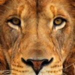 Profile picture of LionLion